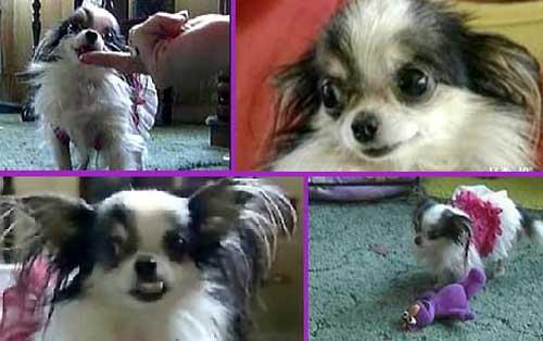 photos of boo the dog
