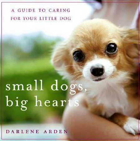 Irrepressible Toy Dog Book