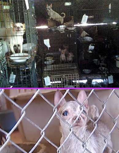 Puppy Mill Horrors
