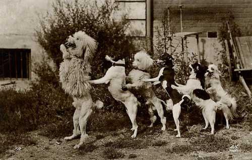 Walkin' the Dog Line Dance by Juliet Hauser - YouTube |Dog Line Dance