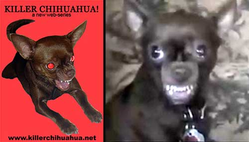 Empire Of The Chihuahua Movies