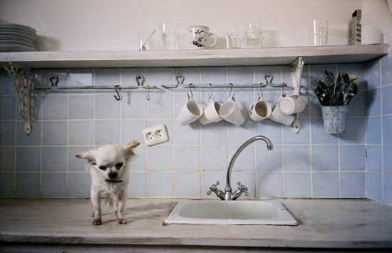 Empire Of The Chihuahua Fun With Your Little Dog