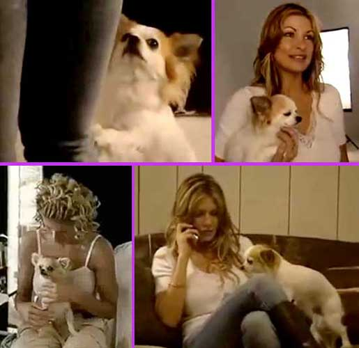 Nicky and Cricket
