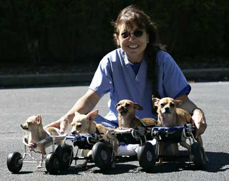 Scooterdogs