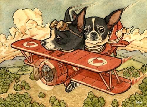 Flying Chihuahuas