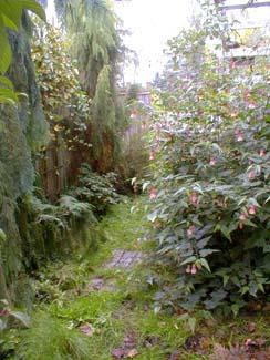 Abutilon Path