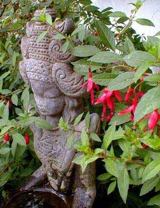 Little Giant Fuchsia