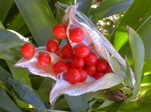 Gladwyn Seeds
