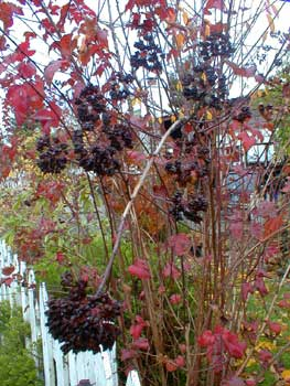 Seed pods in autumn