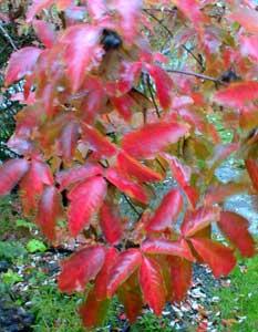 Paperbark Leaves