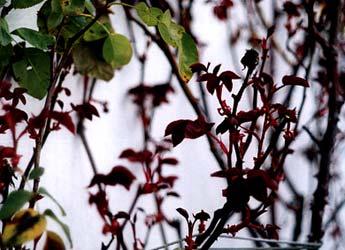 Bright Foliage in March