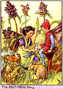 Selfheal Fairy
