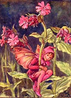 Catchfly Fairy